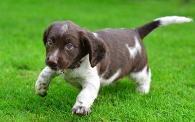 I've got a new pup! 😍