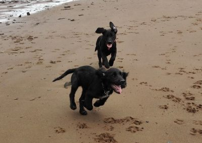 Roxy chases after Alfie