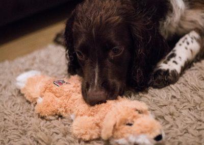 Flo loves her new fox toy