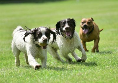 dogs playing in a park