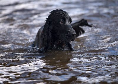 Bertie in the River Clyde