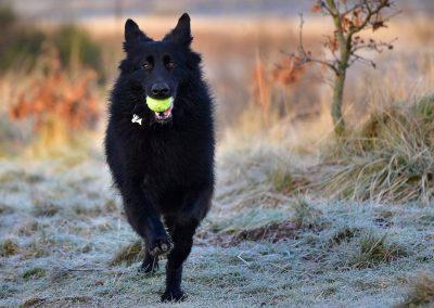 dog walking on frosty grass
