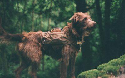 Dog photos using a film camera