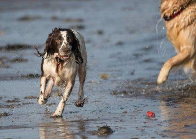 Dexter on the beach