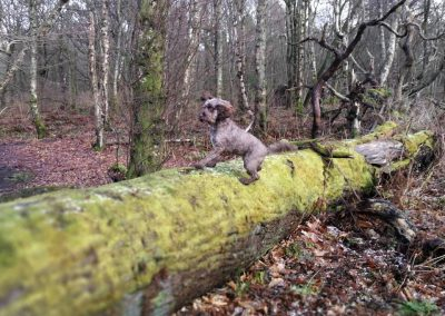 Ella leaps onto a fallen tree trunk