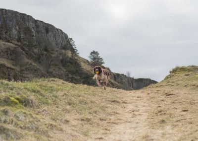 Flo loves a run and its lovely up here