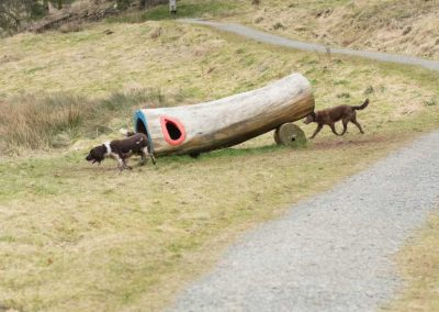 The dogs check out a hollow log