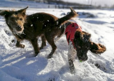 Ruby and Flo in the snow