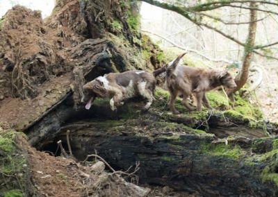Checking out a fallen tree