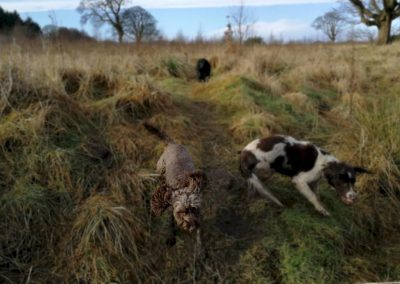 The dogs having a run in the long grass
