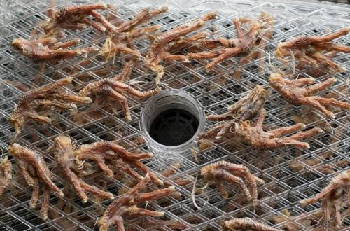 fresh dried chicken feet