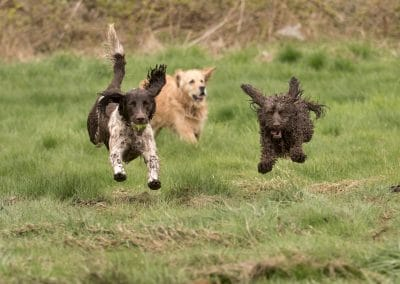 Dogs jumping together