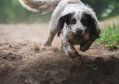 Nevis running on the sand