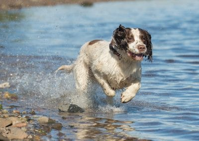 Nevis in running in the boiling heat