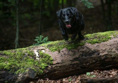 beau-wood