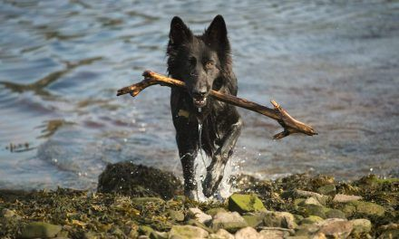 Dog walking photos for August 2018
