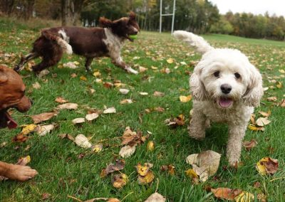 On a Autumn group walk