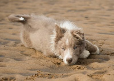 Loving the sand, tries to eat it too
