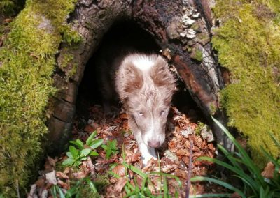 Brodie emerging from a tree hole