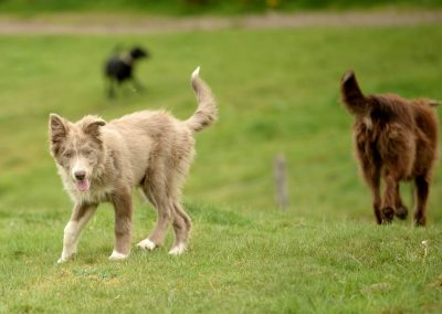 dogs at knapps loch