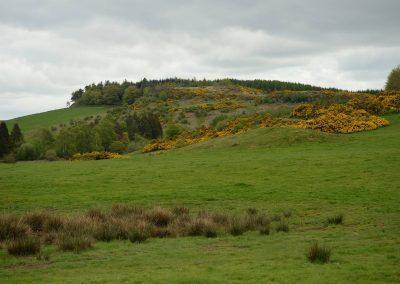 scenery at knapps loch