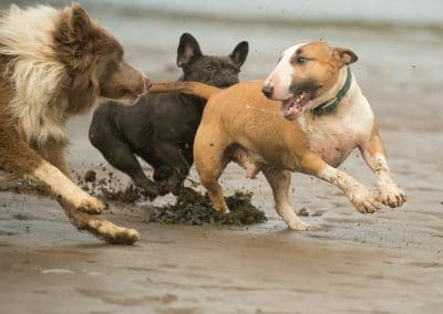Dogs chasing Potiphar