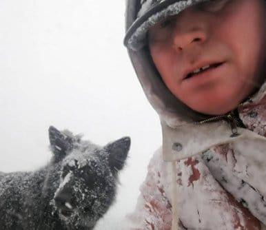 jamie dog walker in snow