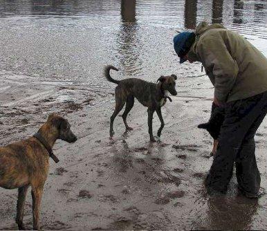 jamie dog walking at beach