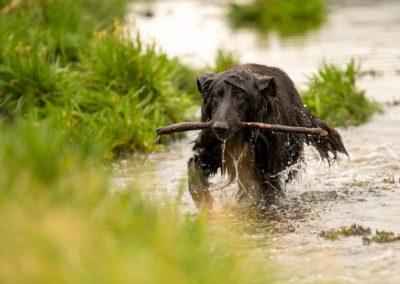 soaking wet dog
