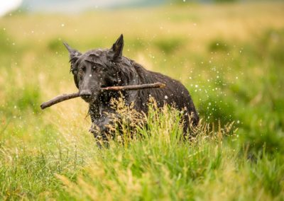 gsd with stick