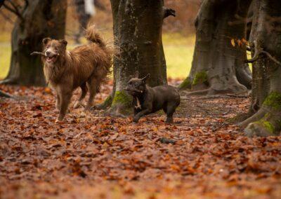 dogs running on fallen leaves