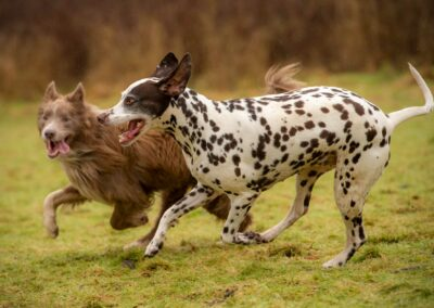 dogs running on a wet day