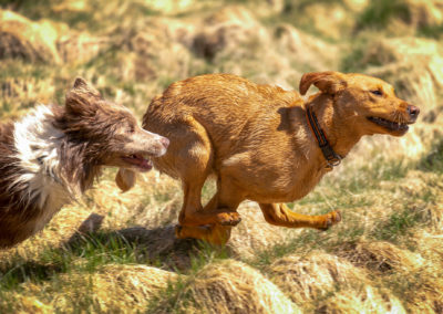dogs chasing each other on sunny day
