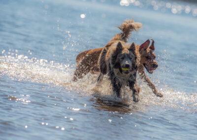 dogs at a sunny beach