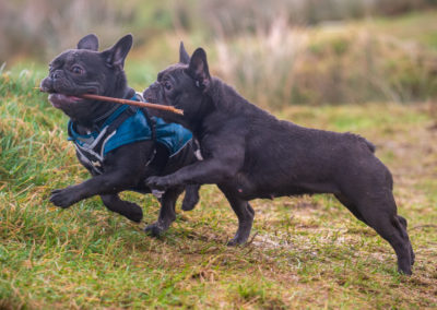 Mylo and Dior chasing a stick