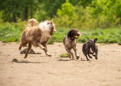 dogs running on a summer beach