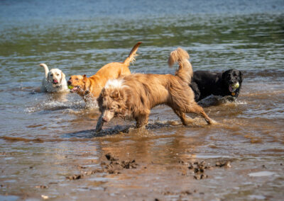 pack of dogs on beach