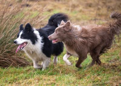 New pals Eddie and Brodie