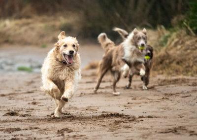 On a run at Erskine beach
