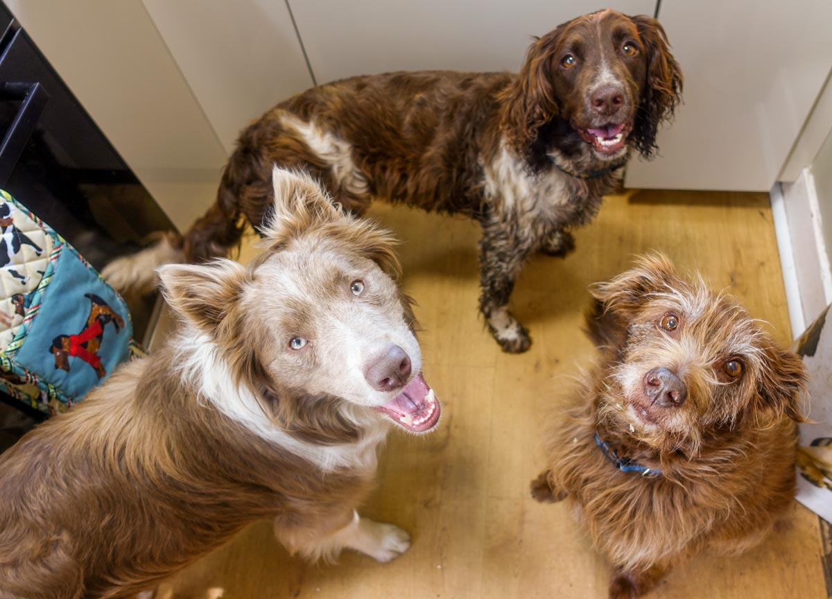 dogs waiting for a biscuit