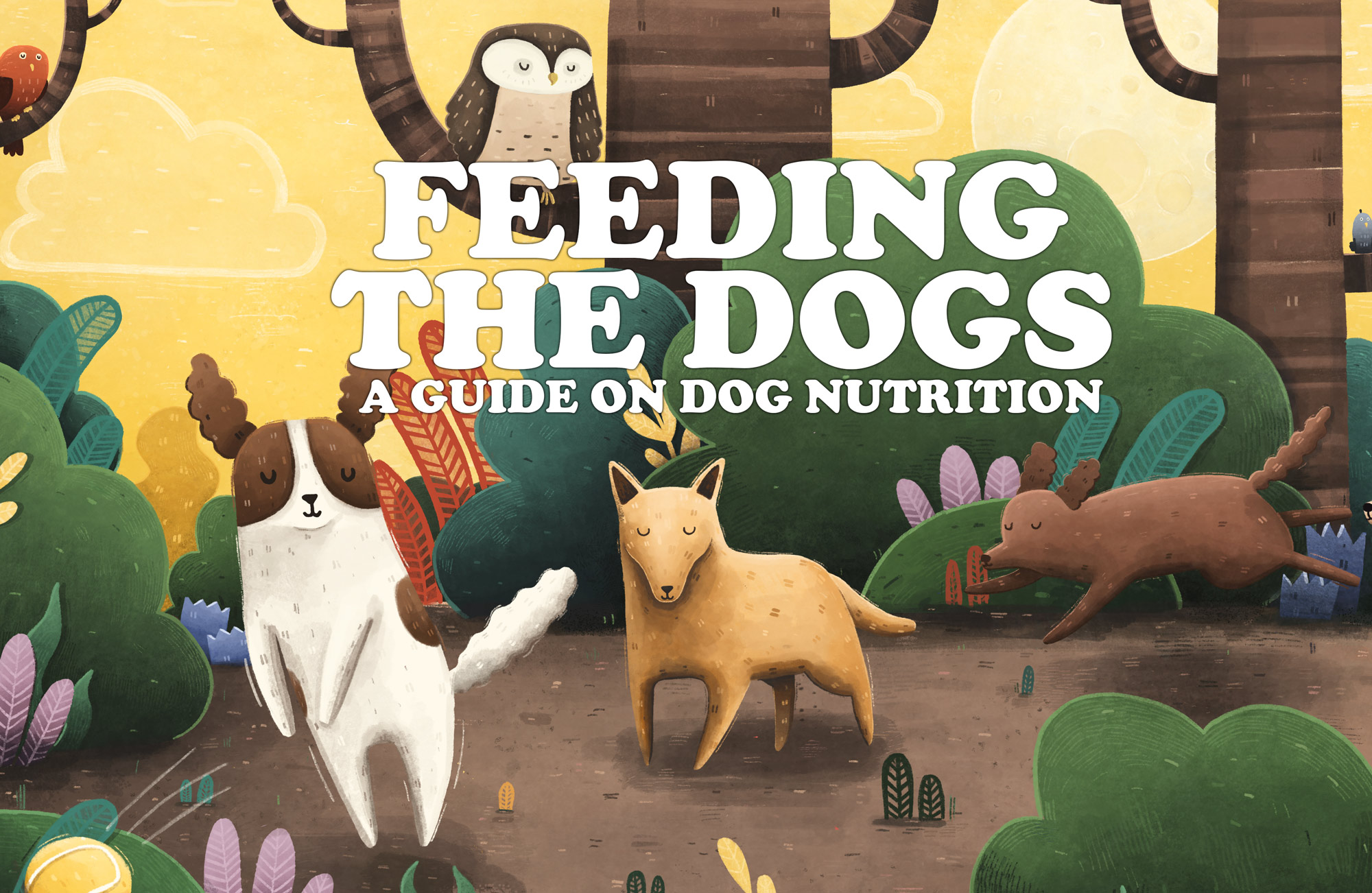 how to feed the dogs