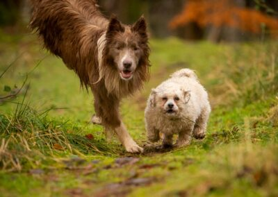 two dogs racing