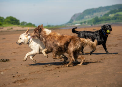 Dogs playing on a summer beach
